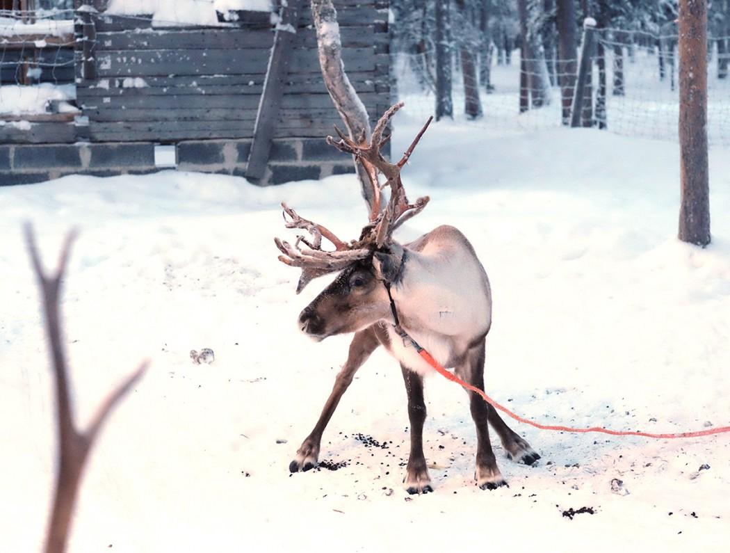 1 semaine en Laponie